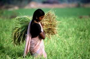Crisis alimentaria indigena