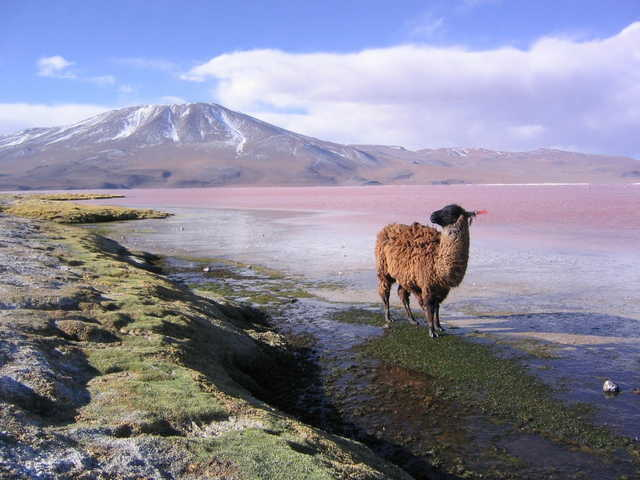 en bolivia 8
